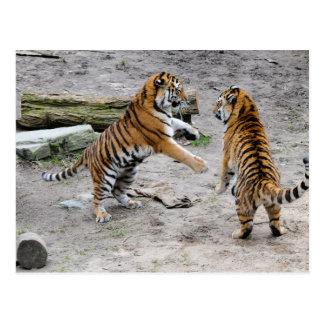 Tigers Playing Postcard