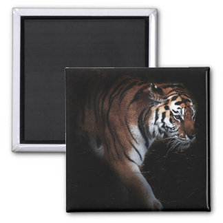 Tigers search square magnet