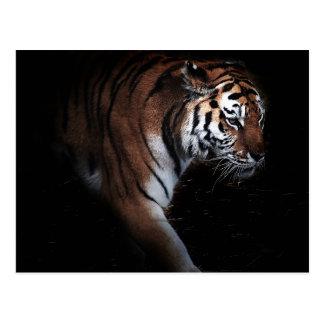 Tigers search postcard