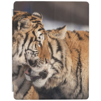 Tigers Showing Affection iPad Cover