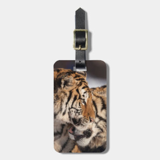 Tigers Showing Affection Luggage Tag