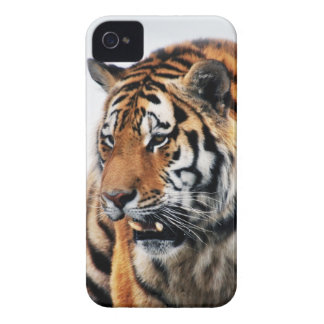 Tigers wild life iPhone 4 cover