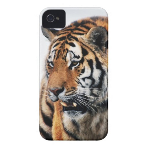 Tigers wild life Case-Mate iPhone 4 case