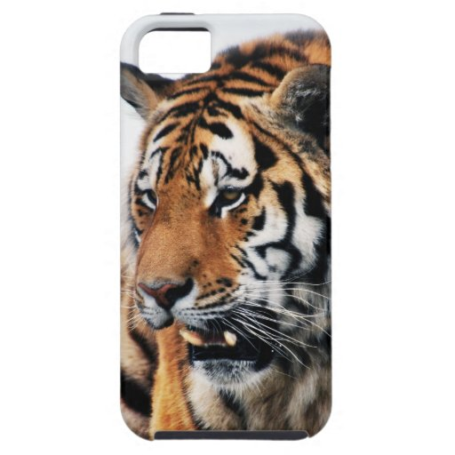 Tigers wild life iPhone 5 cover
