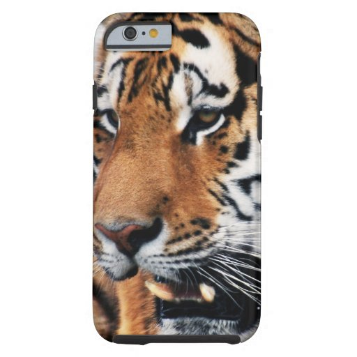 Tigers wild life iPhone 6 case
