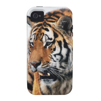 Tigers wild life iPhone 4/4S cover
