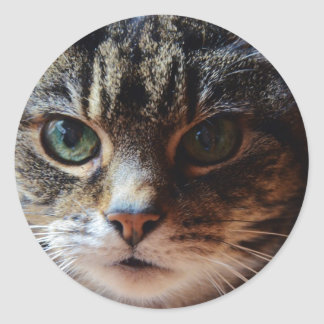 Tiggy. Round Sticker