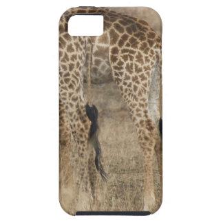 Tight crop of two Giraffes (Giraffa iPhone 5 Cover