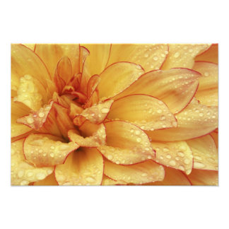 Tight in photographs of Dalhia flower with the 2 Photo Art