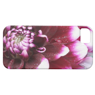 Tight in photographs of Dalhia flower with the iPhone 5 Case