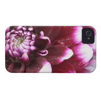 Tight in photographs of Dalhia flower with the Case-Mate iPhone 4 Cases