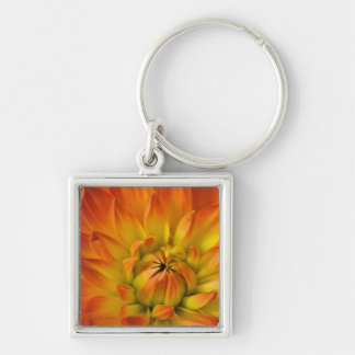 Tight in photographs of Dalhia flower with the Key Ring