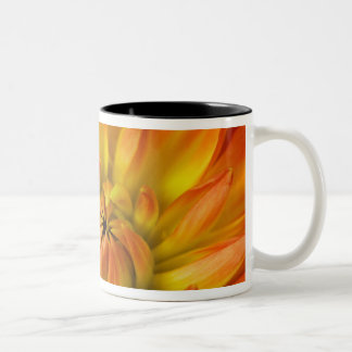Tight in photographs of Dalhia flower with the Two-Tone Coffee Mug