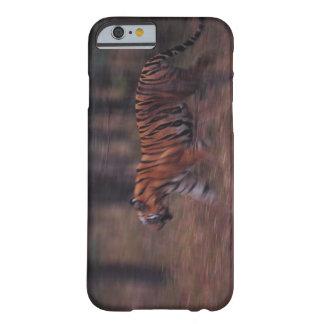 Tigre que anda através da floresta barely there iPhone 6 case