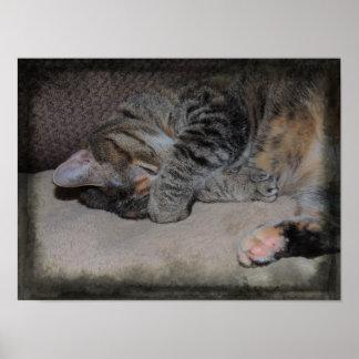 Tikka the Cat Poster