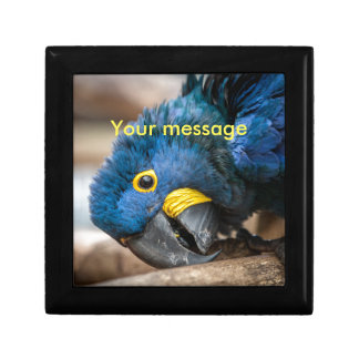 Tile box with featuring cute Hyacinth Macaw parrot Small Square Gift Box