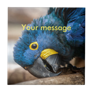 Tile with blue Hyacinth Macaw parrot