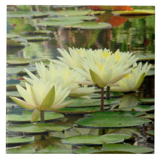 TILE/ YELLOW LOTUS BLOSSOMS IN LILY POND LARGE SQUARE TILE