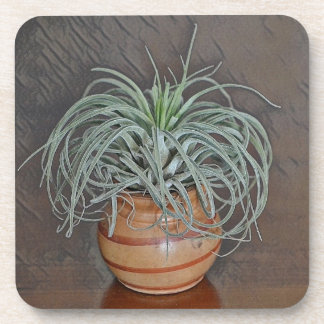 Tillandsia Oaxacana Air Plant Coaster