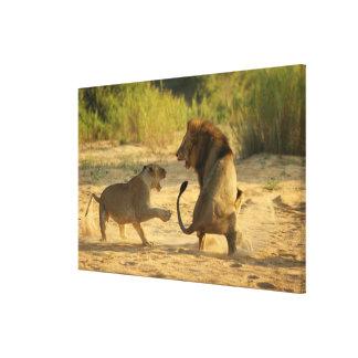 Timbavati River, Kruger National Park, Limpopo Canvas Prints
