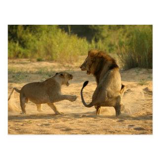 Timbavati River, Kruger National Park, Limpopo Postcard