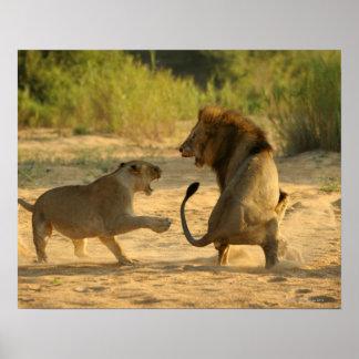 Timbavati River, Kruger National Park, Limpopo Poster