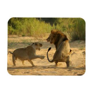 Timbavati River, Kruger National Park, Limpopo Rectangular Photo Magnet