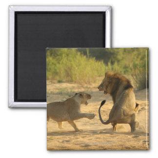 Timbavati River, Kruger National Park, Limpopo Square Magnet