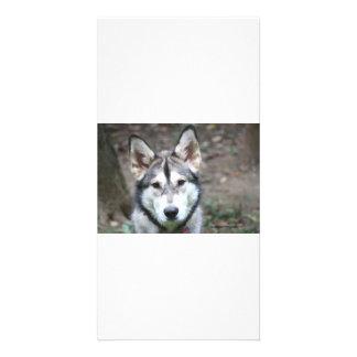 Timber Need A Hug Photo Cards
