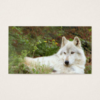 Timber or Gray wolf Business Card