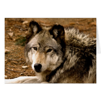Timber Wolf 1630 Note Card