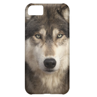 Timber wolf by Jim Zuckerman iPhone 5C Case