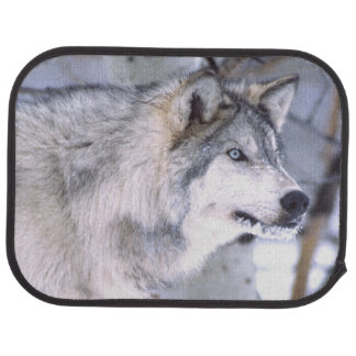 Timber Wolf, Canis lupus, Movie Animal Utah) Floor Mat