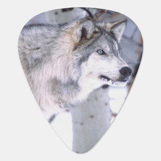 Timber Wolf, Canis lupus, Movie Animal Utah) Guitar Pick