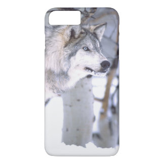 Timber Wolf, Canis lupus, Movie Animal Utah) iPhone 8 Plus/7 Plus Case