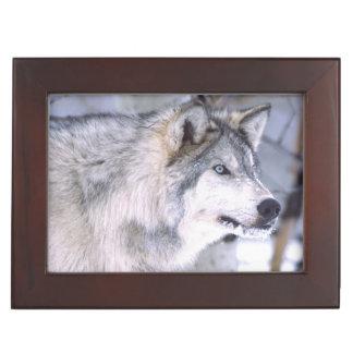 Timber Wolf, Canis lupus, Movie Animal Utah) Keepsake Box