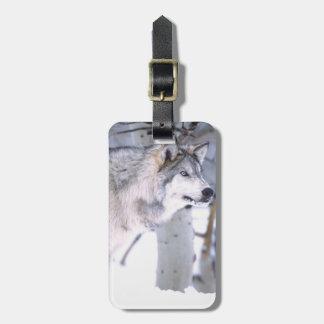 Timber Wolf, Canis lupus, Movie Animal Utah) Luggage Tag