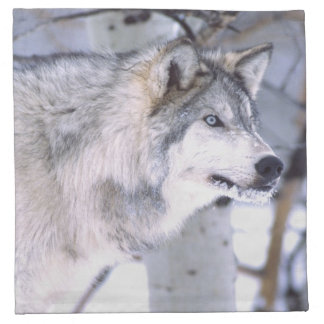 Timber Wolf, Canis lupus, Movie Animal Utah) Napkin