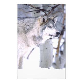Timber Wolf, Canis lupus, Movie Animal Utah) Photographic Print