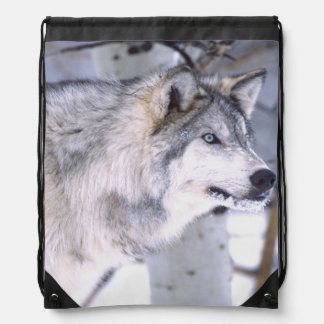 Timber Wolf, Canis lupus, Movie Animal Utah) Cinch Bags