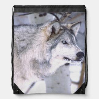 Timber Wolf, Canis lupus, Movie Animal Utah) Rucksack