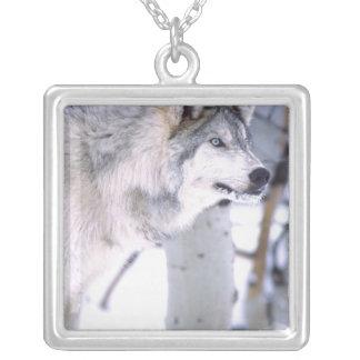 Timber Wolf, Canis lupus, Movie Animal Utah) Square Pendant Necklace