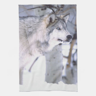 Timber Wolf, Canis lupus, Movie Animal Utah) Tea Towel