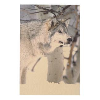 Timber Wolf, Canis lupus, Movie Animal Utah) Wood Wall Art