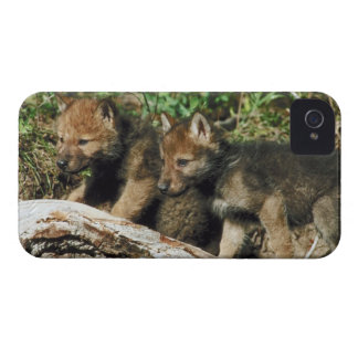 Timber wolf cubs Case-Mate iPhone 4 case