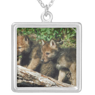 Timber wolf cubs silver plated necklace