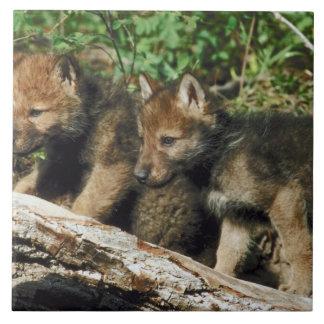 Timber wolf cubs tile
