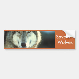 Timber Wolf from Junglewalk.com Bumper Sticker