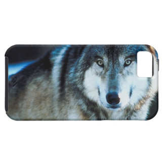 Timber Wolf iPhone 5 Cases