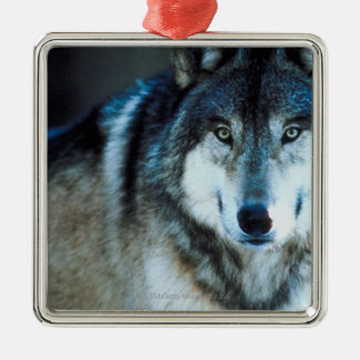 Timber wolf Silver-Colored square decoration